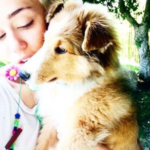 Miley cyrus adopts another puppy