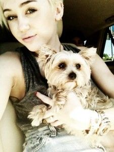 Miley cyrus's dog lila hospitalized