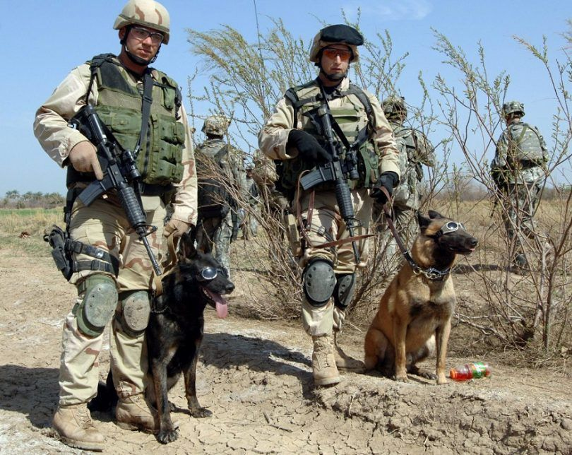 Hero dogs in military