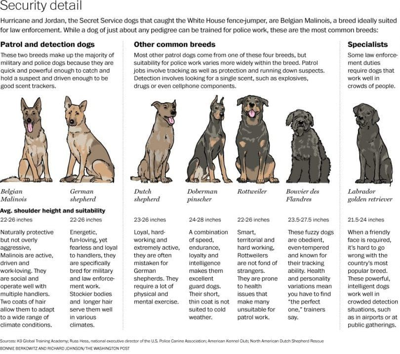 Military dogs infographic