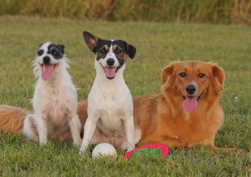 Mixed breed dogs: smarts and cuteness in a nutshell
