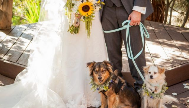 Money saving secret revealed about dogs in weddings