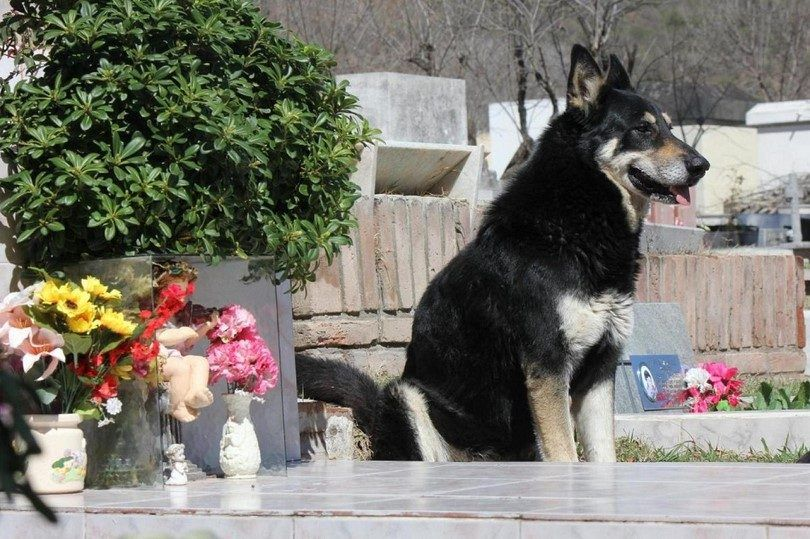Most loyal dog breeds: 10 amazing breeds to count on