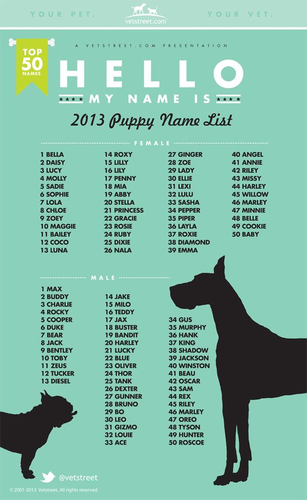 Most Popular Puppy Names of 2013 — Infographic