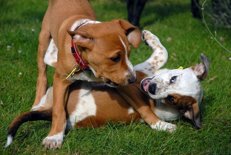 My dog hates other dogs: top techniques to teach fido to play nice