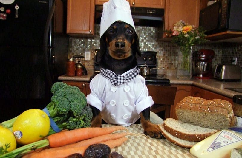 Chef Crusoe dachshund