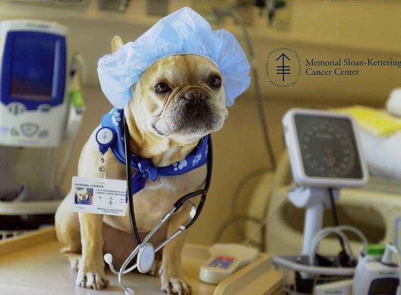 Neutering a dog: avoid the danger of overpopulation