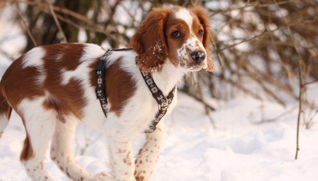 New celebrity puppy alert!