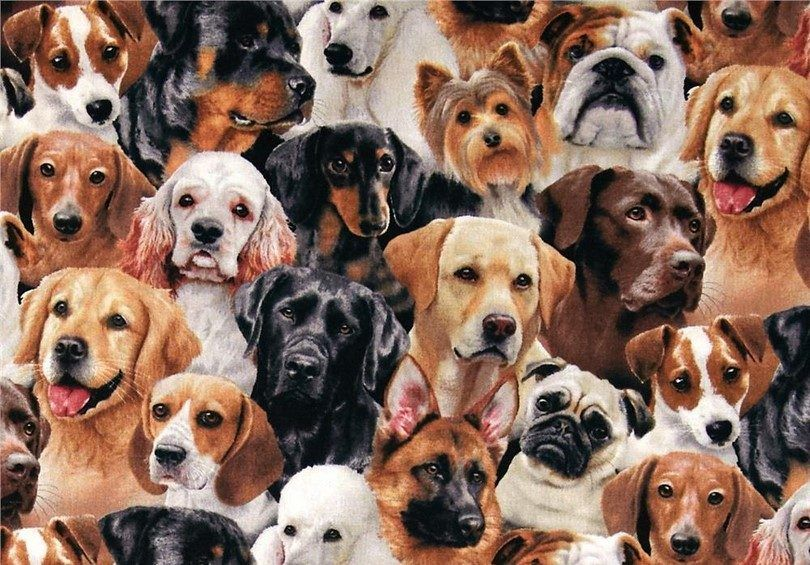New dog breeds: overview of new additions in last years