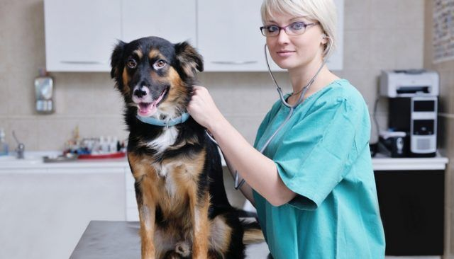 New High-Tech Device Makes HUGE Advance in Veterinary Medicine