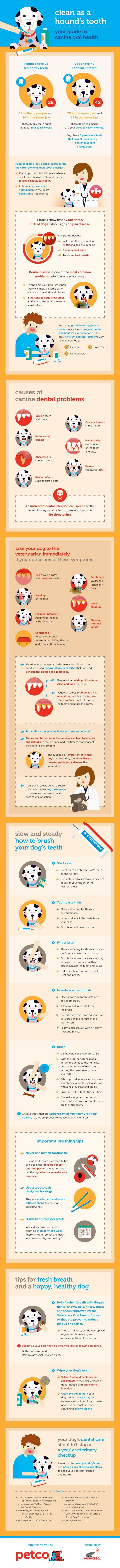 New infographic on canine oral health from petco!