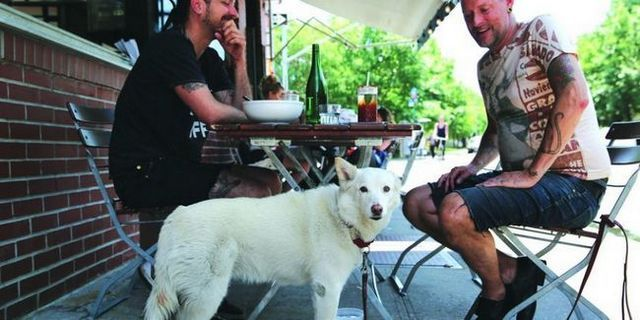 New york law allows you to take your dog to dinner