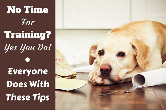No time for dog training? Follow these tips and techniques