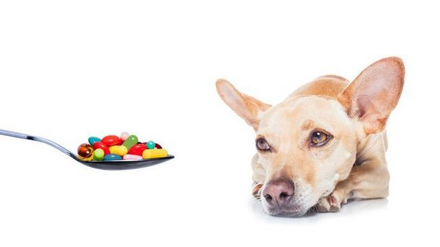 Over-the-counter medicines that can be safely given to your dog