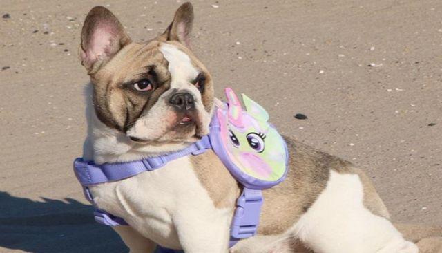 Pal pak is an adorable way to keep your dog safe