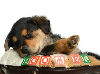 Picking the perfect puppy name