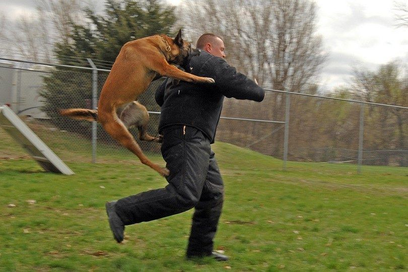 Personal protection dog training: what to consider when you want a guard dog