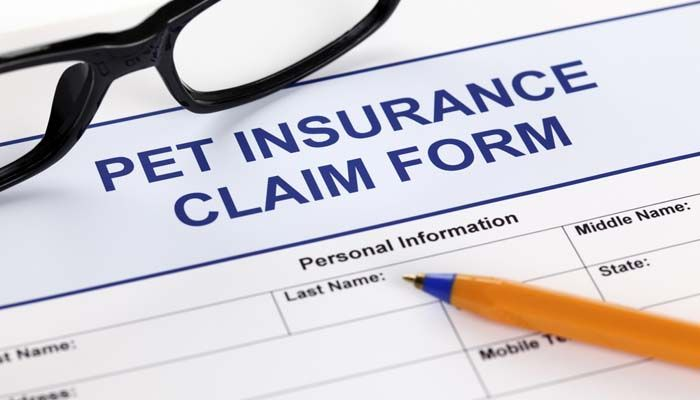 Pet insurance comparison: what is the best pet insurance for dogs?