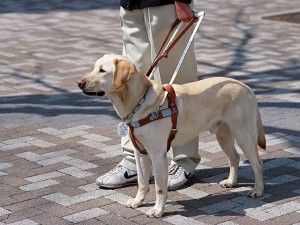 Petition is Circling to Crack Down on Fake Service Dog Products