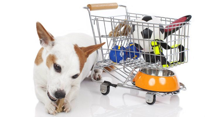 Pets on a budget: what's the best place to buy cheap dog supplies?