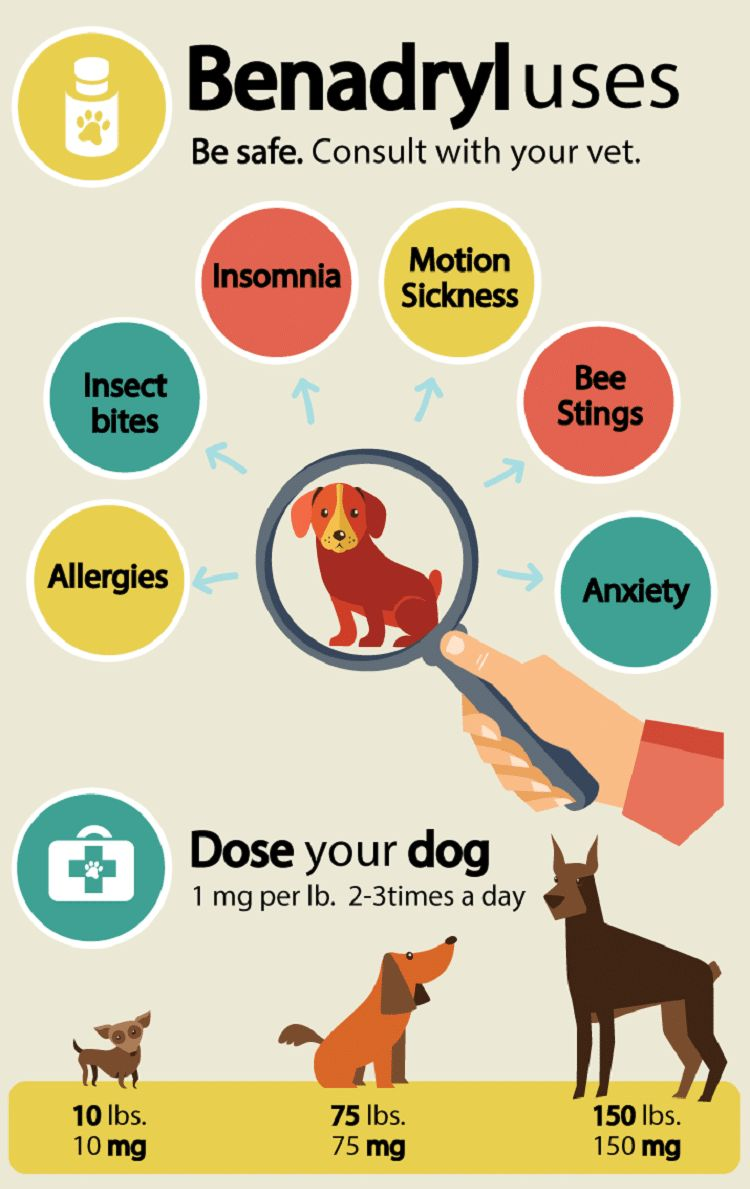 Poison ivy on dogs: learn to recognize the signs and symptoms
