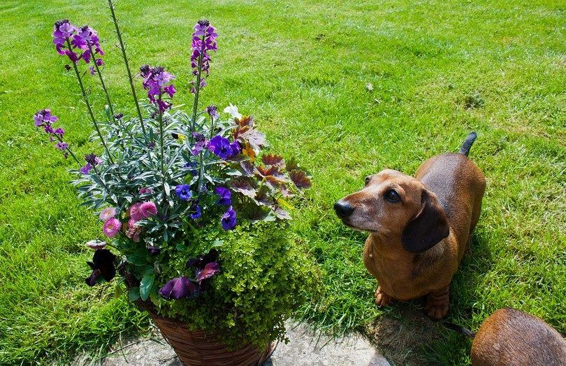 Poisonous plants for dogs: learn to protect your pooch in nature