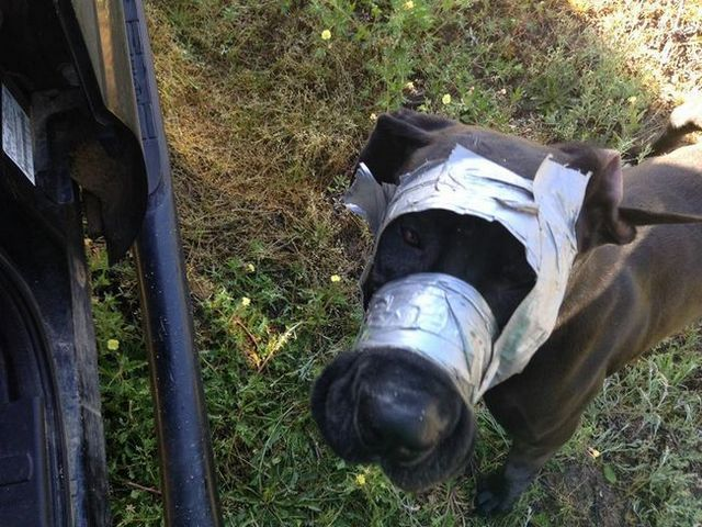 Police asking for help to find duct-taped dog's owner