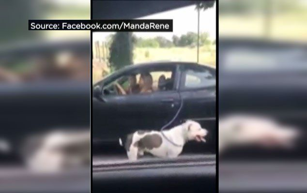 Police searching for woman 'walking' dog while driving a car