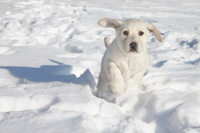 Preparing your dog to play in the snow