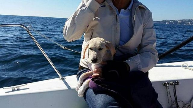 Puppy lost at sea, italian sailors to the rescue