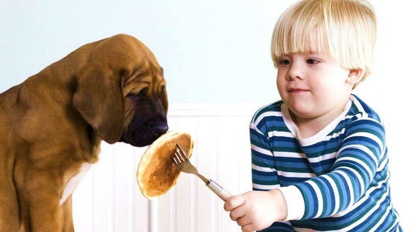 Puppy not eating: causes and possible treatments