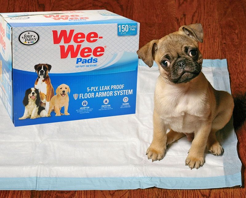 Four Paws Wee-Wee Standard Dog Housebreaking Pads