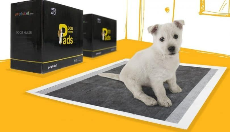Petphabet THE BEST Carbon Technology Activated 23 by 24 Inches Odor Killer Dog Training Pads