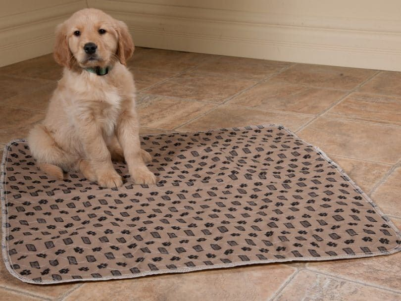 Simple Solutions Washable Training and Travel Pad