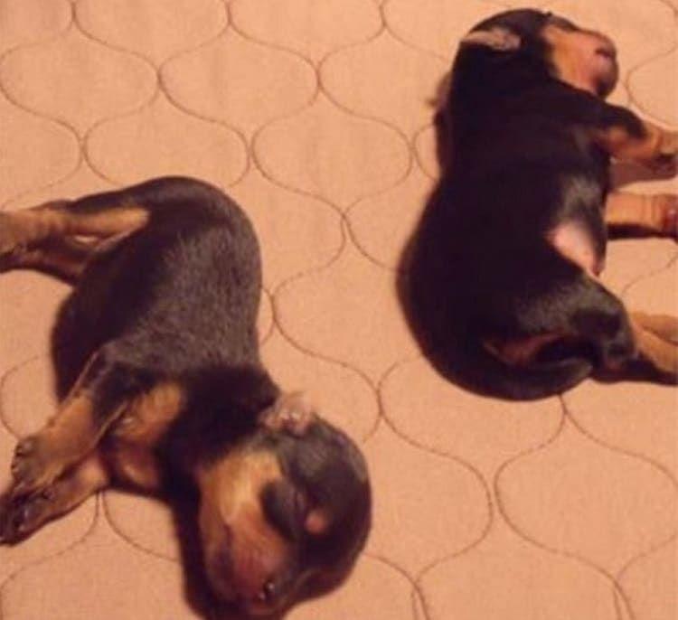 EZwhelp Washable Whelping & Puppy Pad