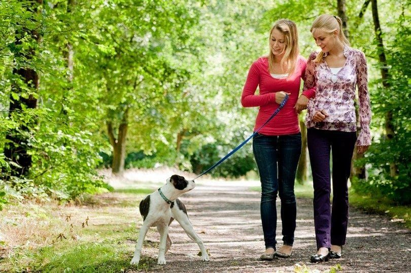 Dog not trained on time to walk by leg
