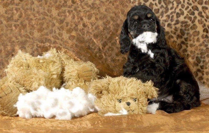 Naughty puppy chewed everything