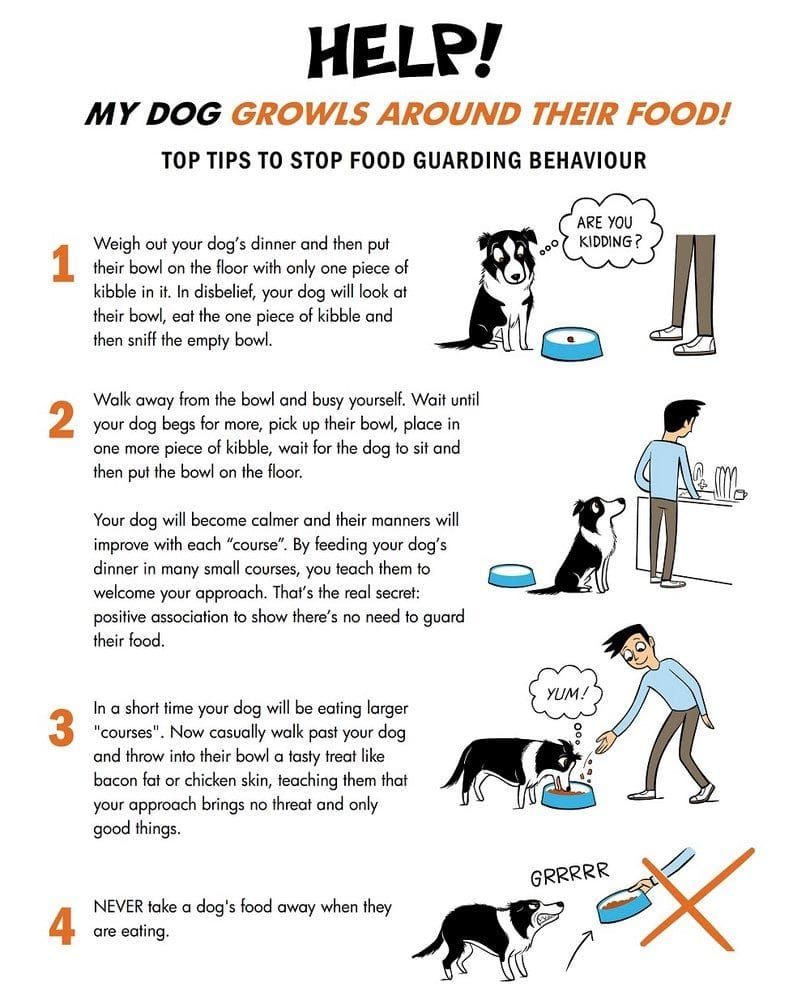 Food guarding infographic