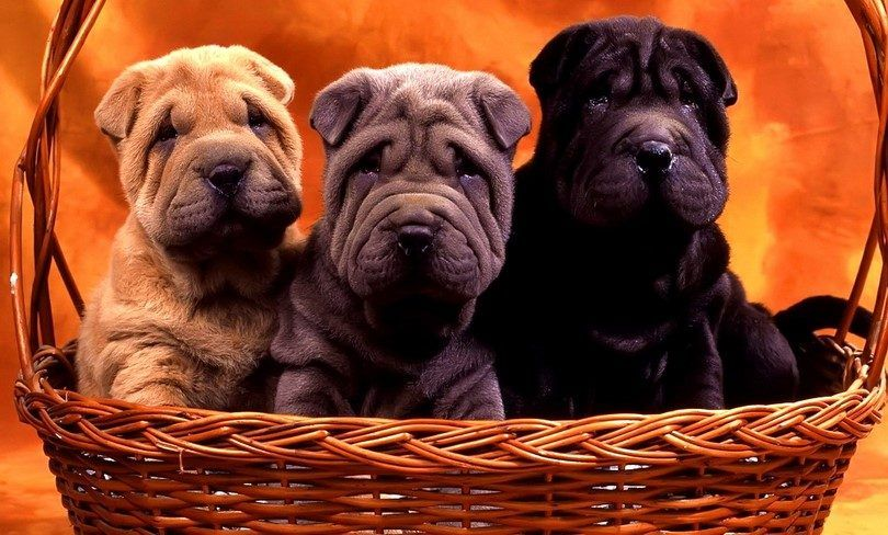Questions to ask a dog breeder: 14 questions to know your future puppy better