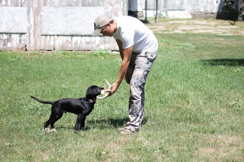 Training a dog to hunt