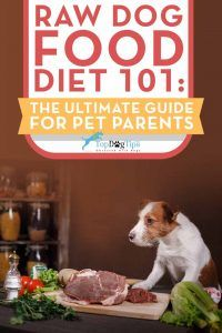 Raw diet for dogs 101: the ultimate guide