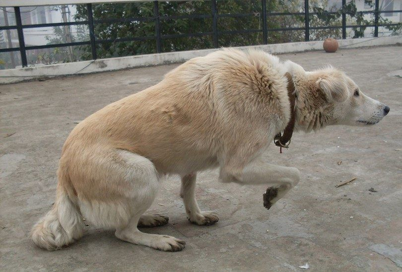 Reading dog body language: understanding what your dog is trying to say