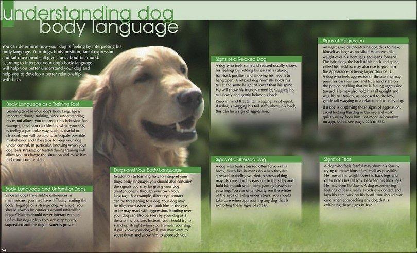 Understaning dog body language