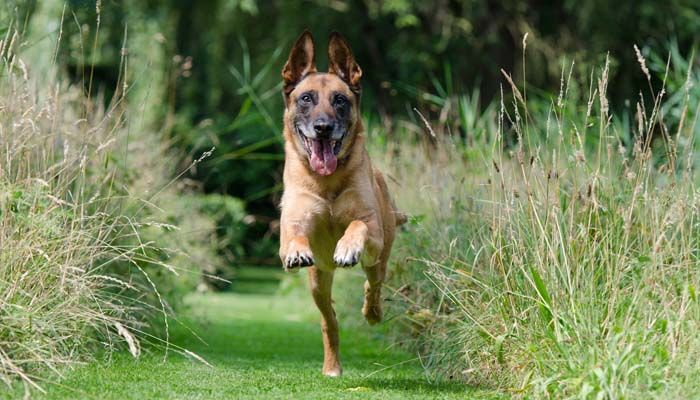 Recall command basics and how to teach it to your dog