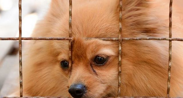Rehabilitating a puppy mill dog