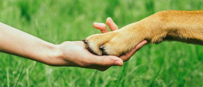 Respect your fido: humane dog training equipment