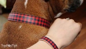 Review: matching friendship collar for dogs