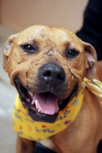 Rip lucas: michael vick's prized dogfighting champion euthanized