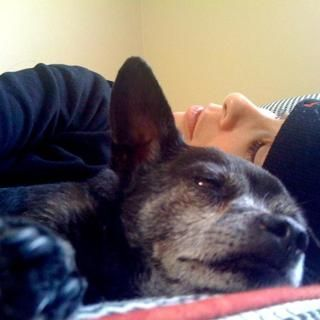 Sarah silverman posts touching tribute to her senior dog