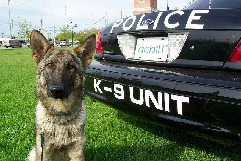 Secret service dogs: the k-9 division